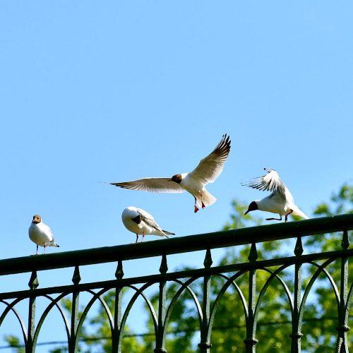 путешествия, travel, фото с путешествий, куда поехать в отпуск, природа, сестрорецк, чайки