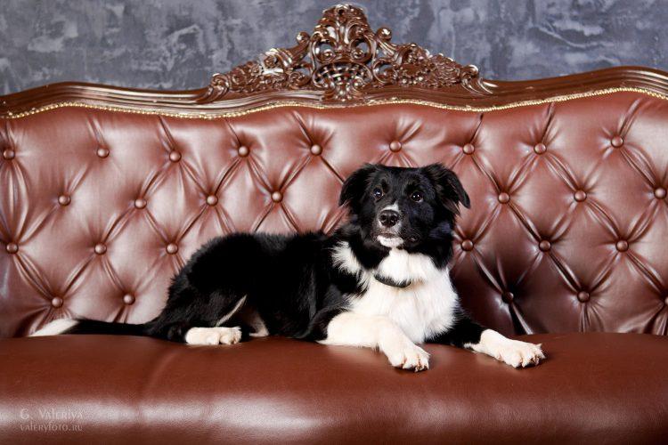 фотосессия животных, съемка собак, фотосессия с собаками,